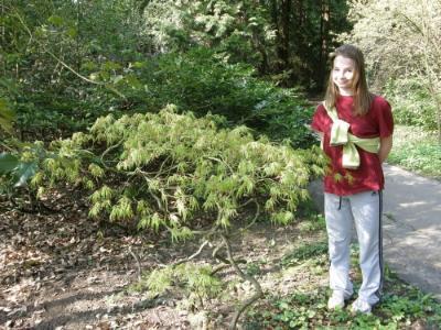 A bonsai-kedvelő Szandi